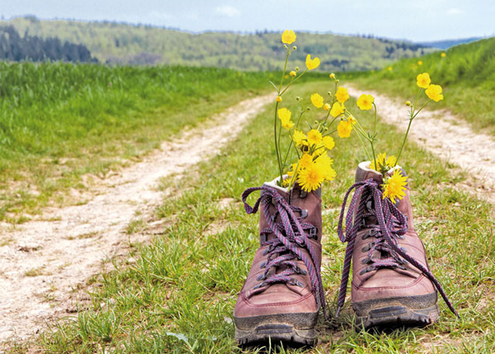 hiking boots with dandelions and other yellow flowers inside them are standing in front of a hiking trail, as part of the sunday special of the selfness hotel SCHWARZWALD PANORAMA